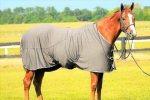 horse-rug